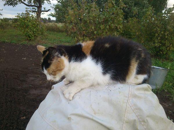 Katė ant nugaros